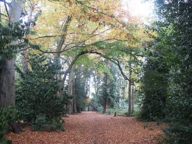 Pine Woods Woodhall Spa - geograph.org.uk - 102320