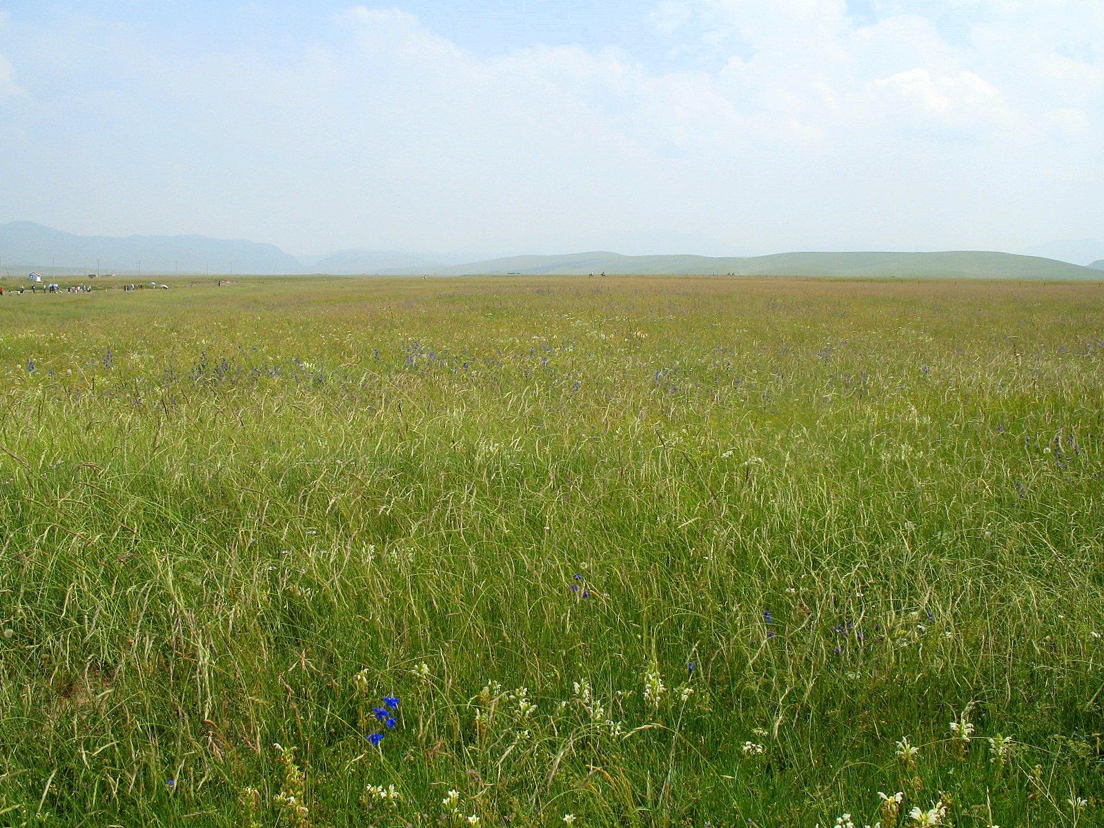 File:Prairie en Chine ...