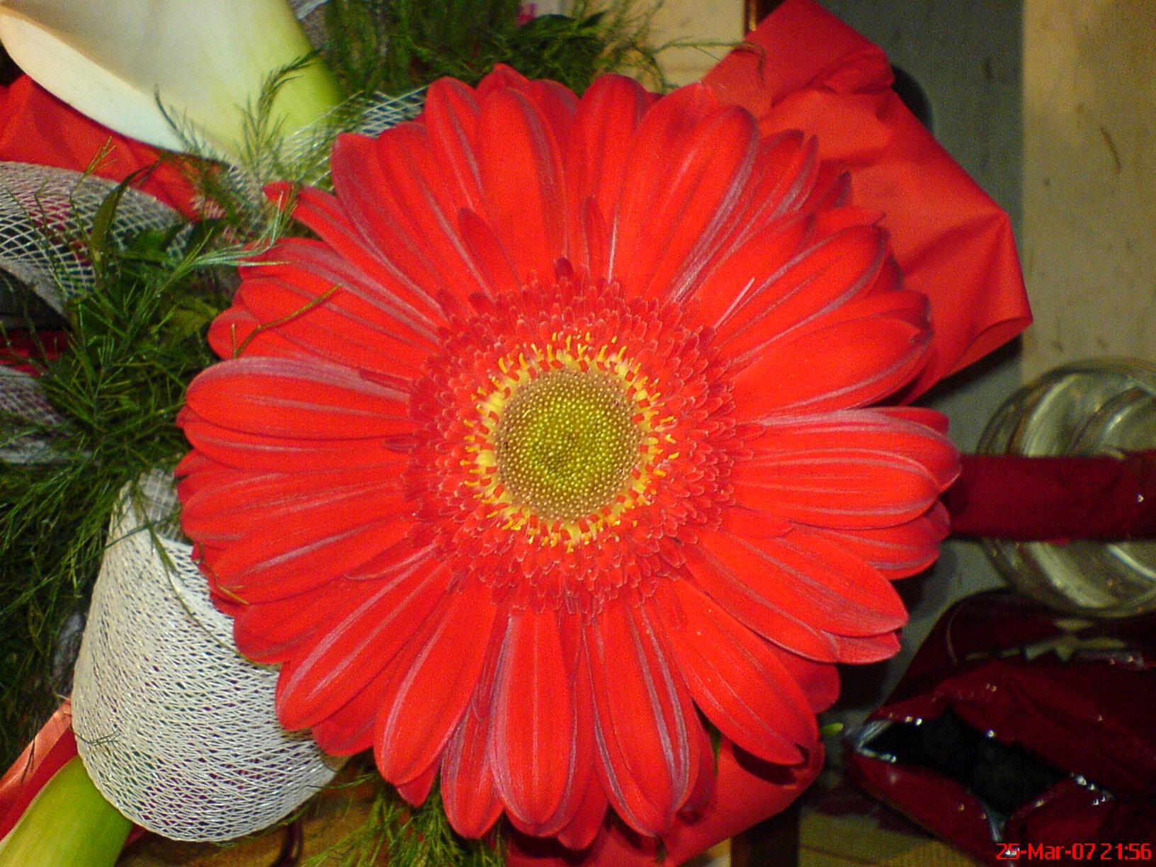 File Red Summer Flower Jpg Wikimedia Commons