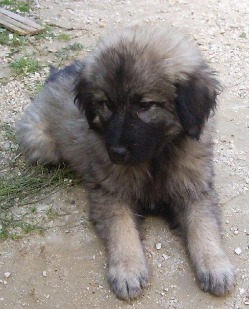 Romanian Dog Rescue South Killinghome