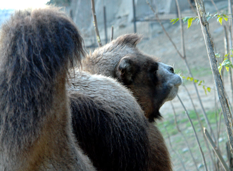 http://upload.wikimedia.org/wikipedia/commons/3/38/Tbilisi_zoo_1.jpg