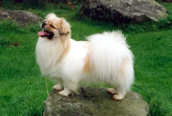 Breeds of small dogs :...
