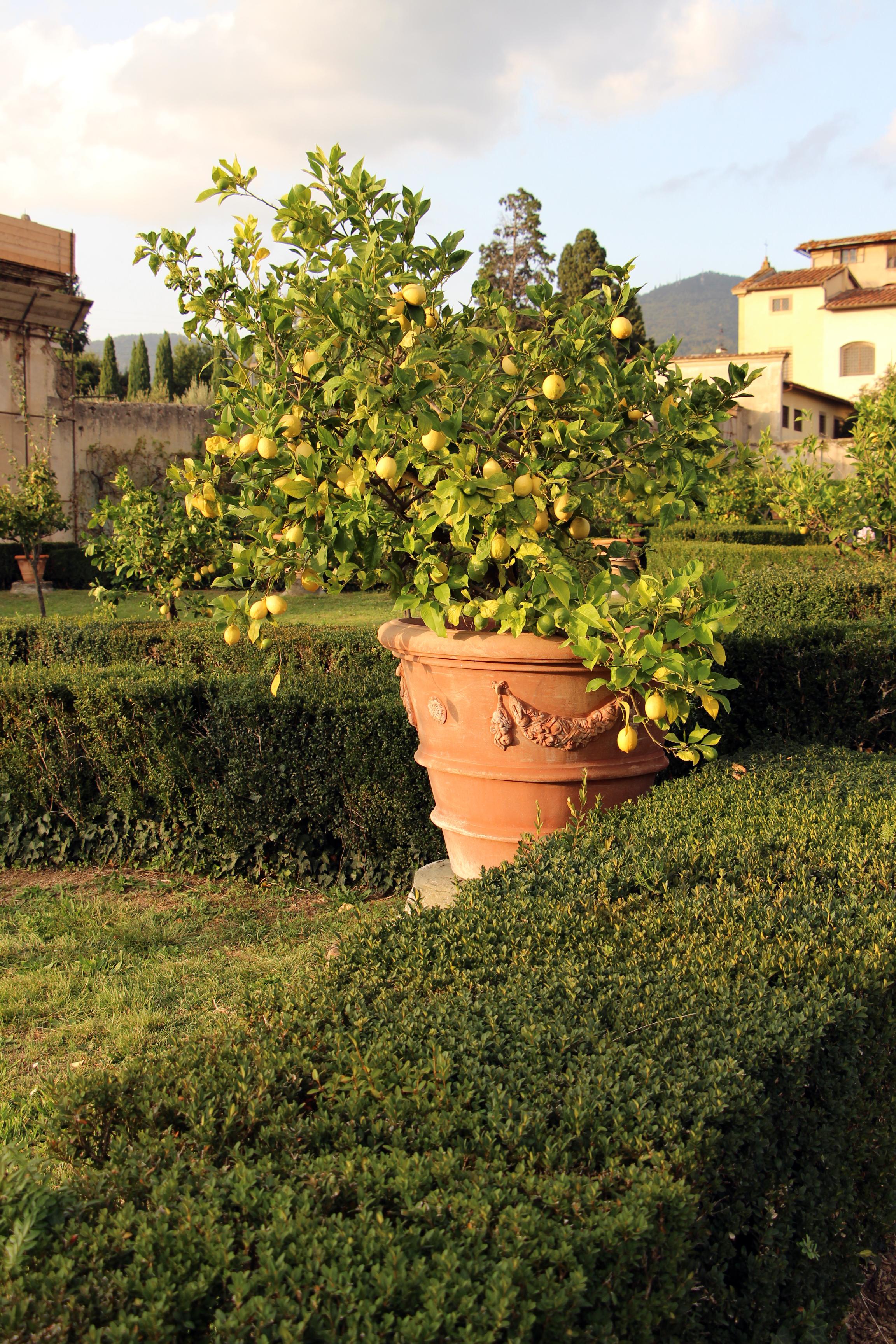 File villa la quiete giardino all 39 italiana limoni 02 jpg - Giardino all italiana ...