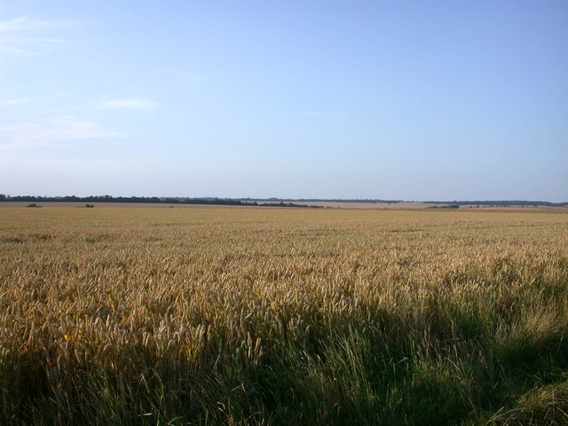 Wheat field beside Wimpole Way - geograph.org.uk - 897241