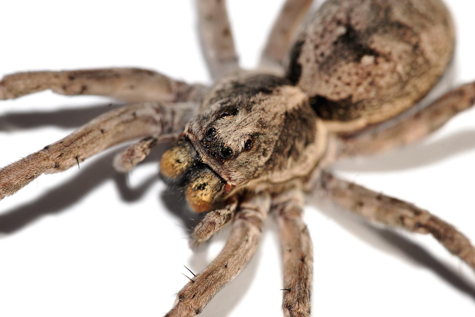 Spider Bite Vs Bed Bug Bites