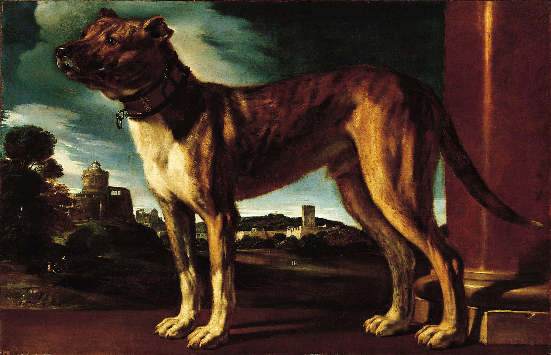 File Aldrovani Dog By Guercino Norton Simon Museum Jpg