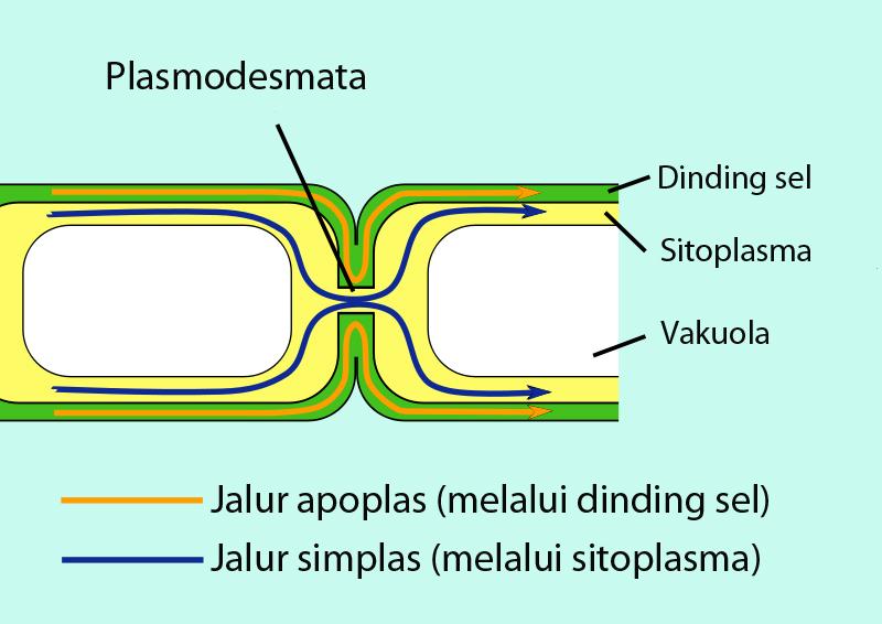 apoplas wikipedia bahasa indonesia ensiklopedia bebas