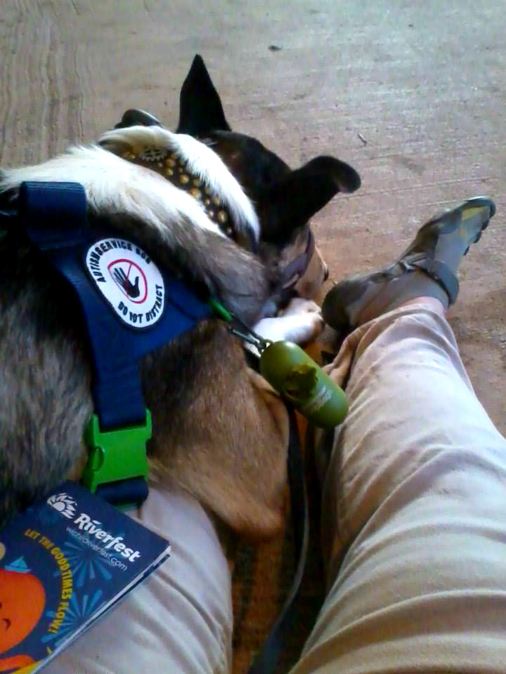Task Trained Service Dog