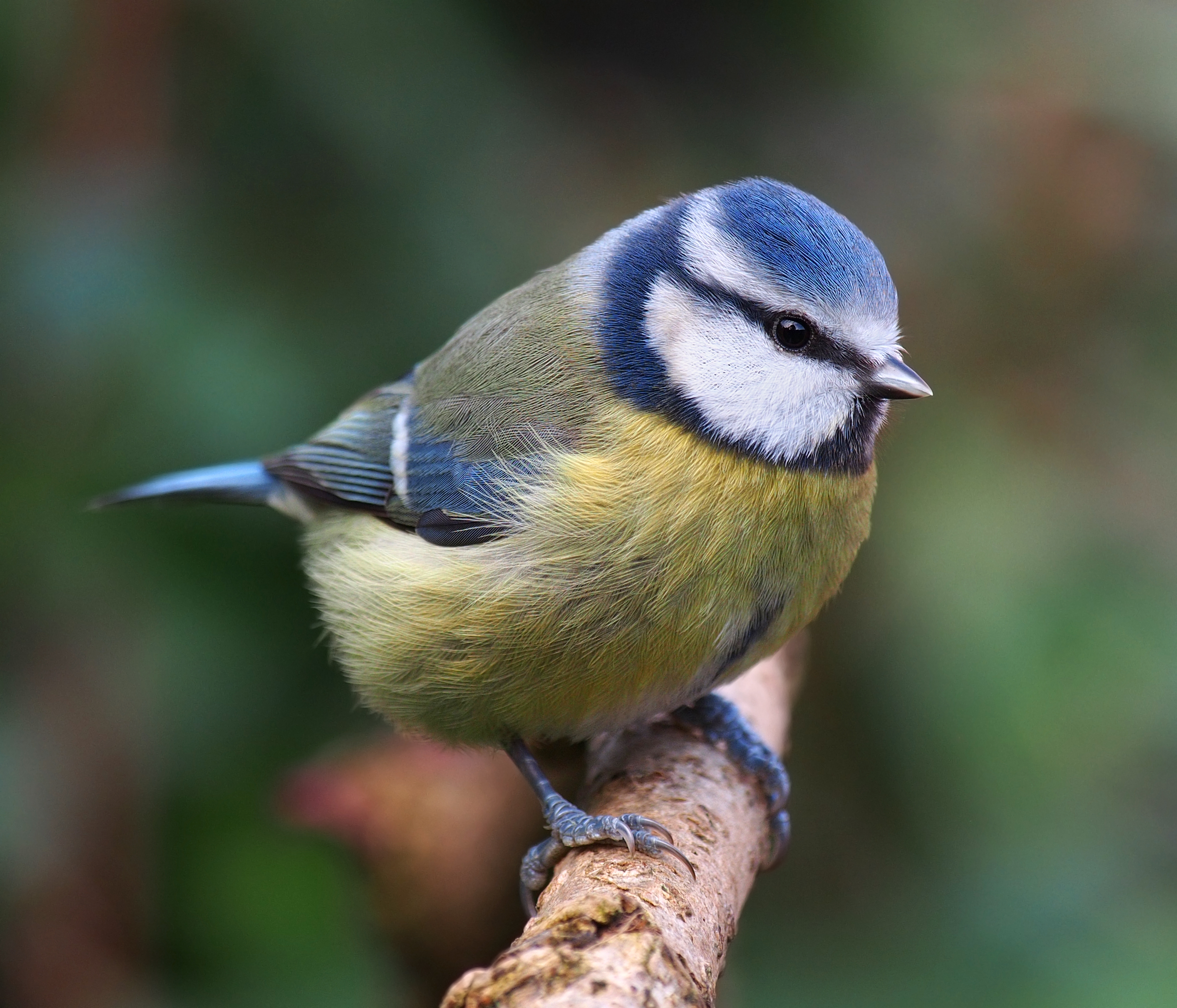 tit close up