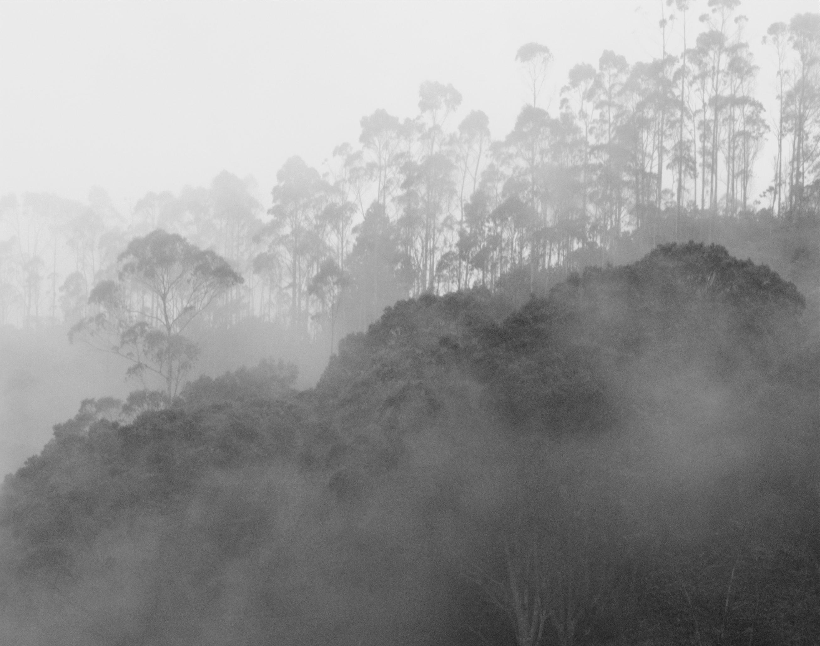 File Bosque De Niebla Jpg Wikimedia Commons