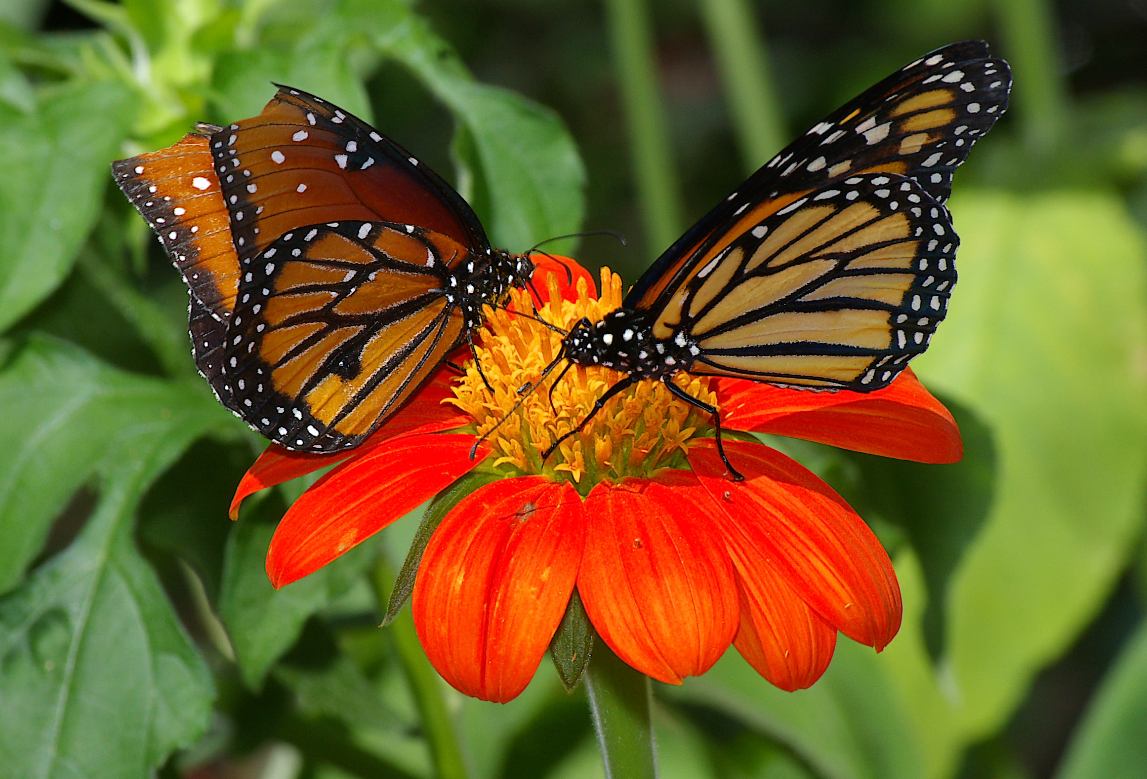 20 beautiful pictures of butterflies for Butterfly in a flower