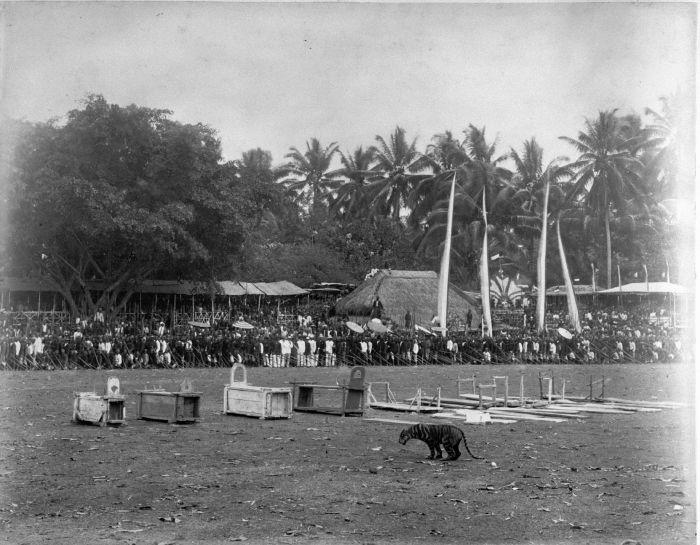 Rampogan Macan di Blitar, antara tahun 1870 - 1892. Fotografer: H. Salzwedel