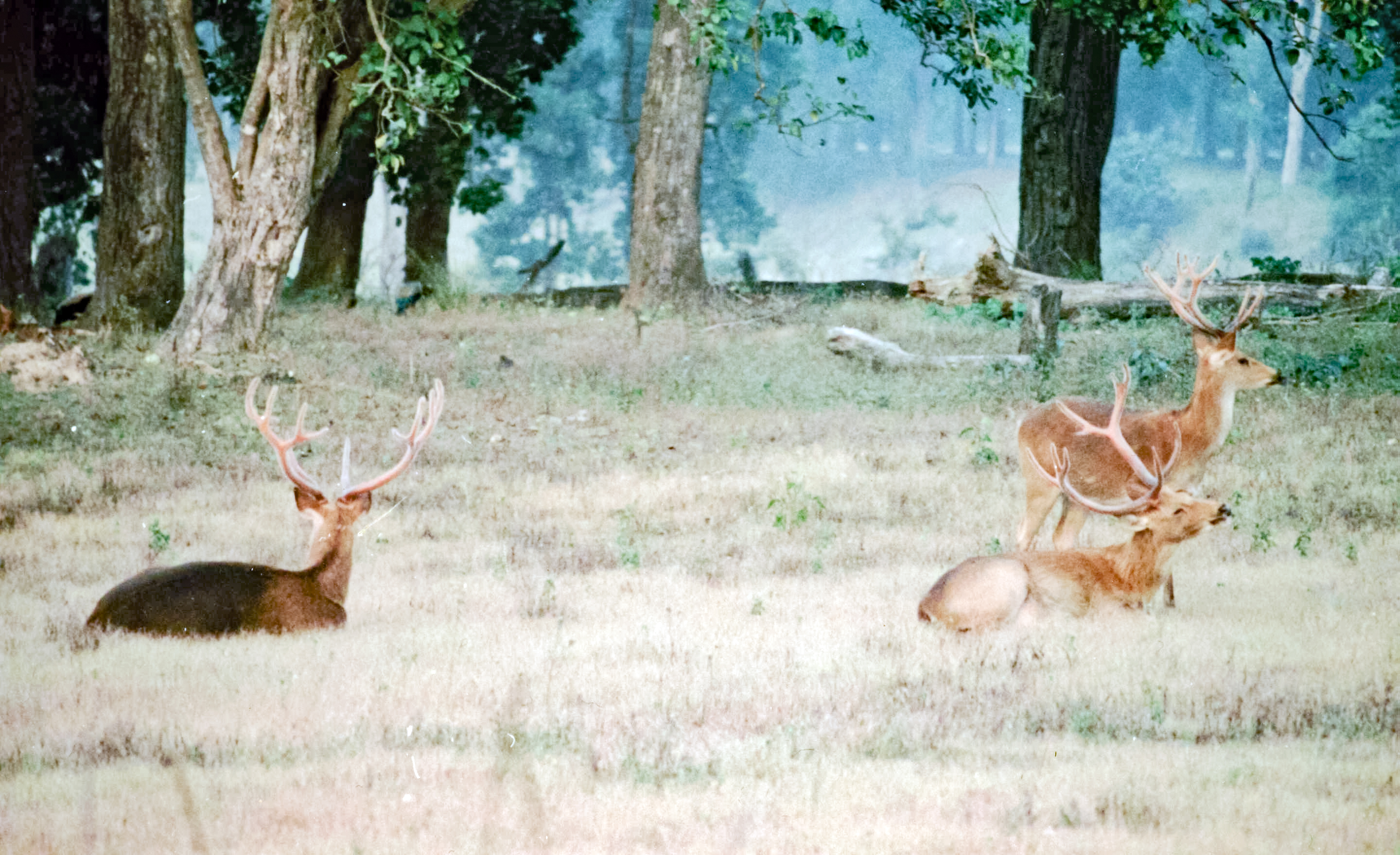 Kanha National Park and Kanha Tiger Reserve