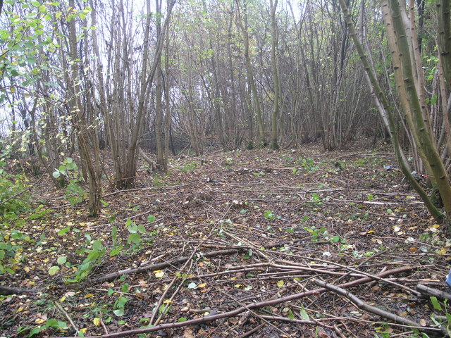 Coppicing in progress - geograph.org.uk - 1568423