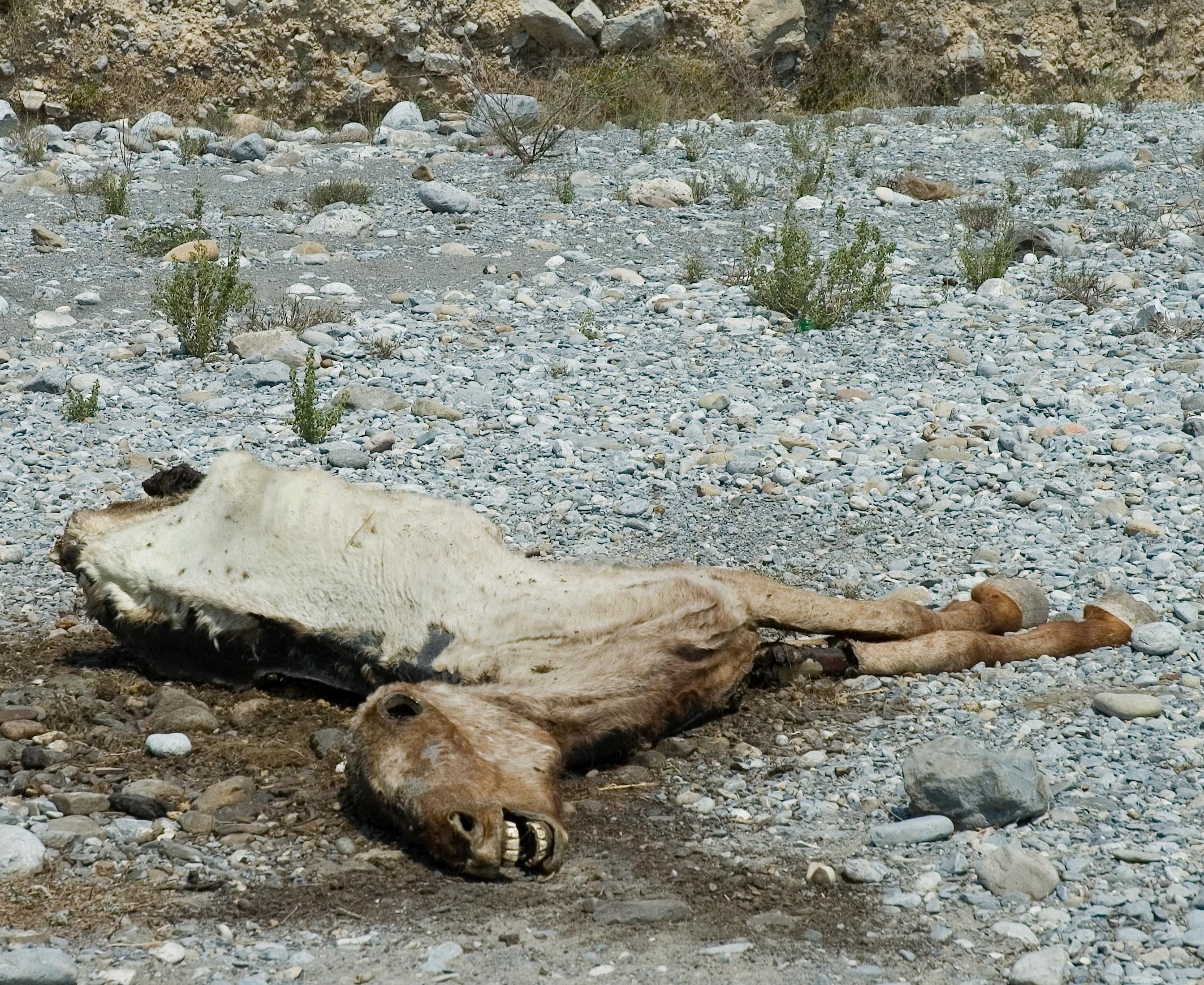 File Dead horse in des...