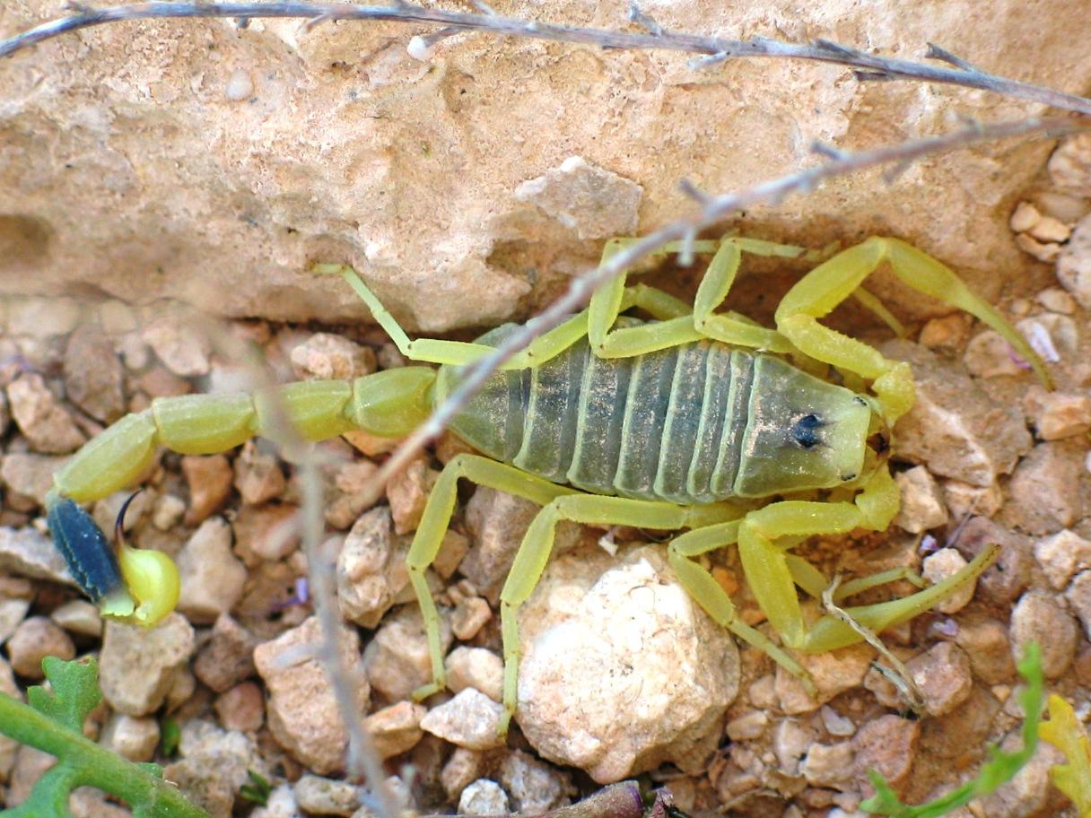 Scorpion Diagram Page 2