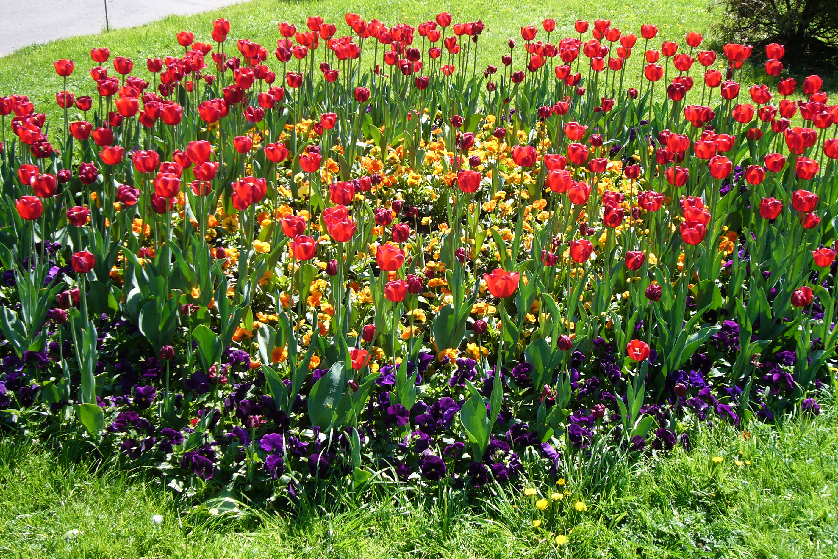 File flower bed moscow jpg wikimedia commons for Best plants for flower beds