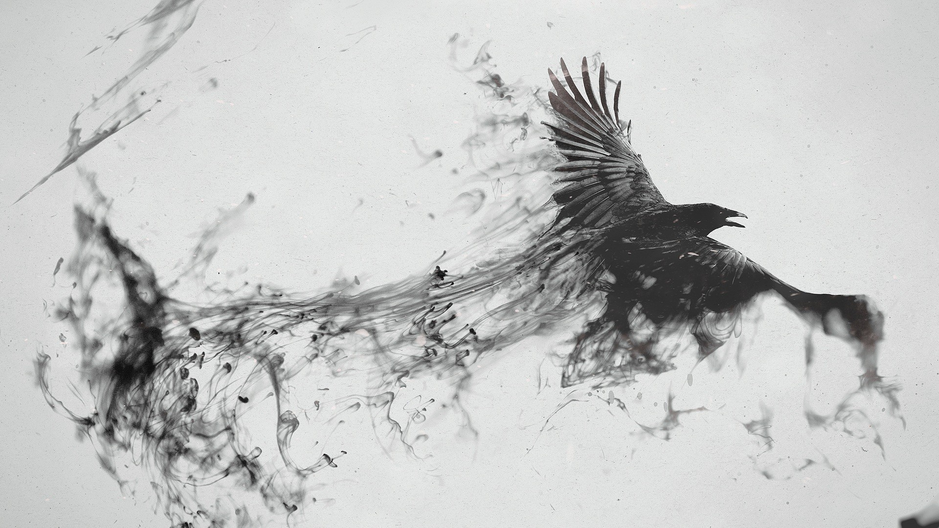 File Flying Bird Smoke Black Wikimedia Commons