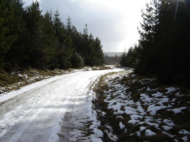 Forest Road Harwood Dale Forest - geograph.org.uk - 1165923