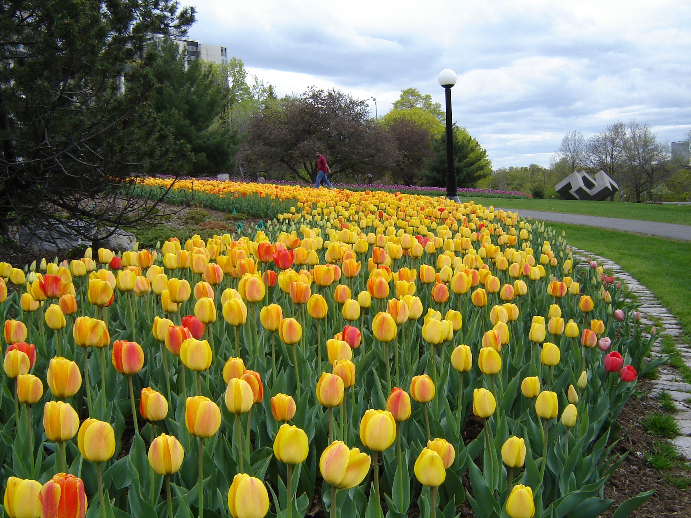 Tulip Garden Ideas