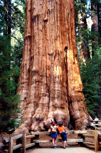 sequoia and kings canyon national parks � travel guide at