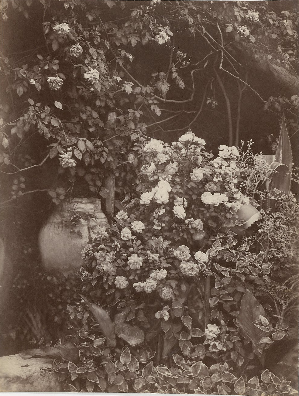Fiori 94.File Gloeden Wilhelm Von 1856 1931 N 2594 Giara Con Fiori