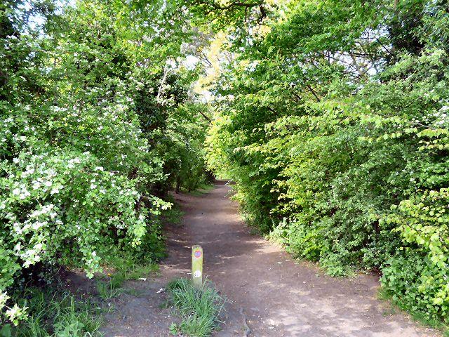 Goyt Way - geograph.org.uk - 1300275