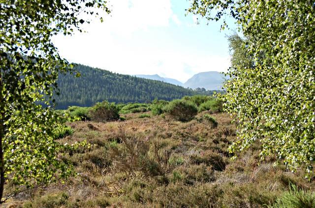 Near Loch Pityoulish - geograph.org.uk - 212060