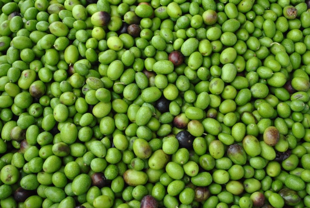 Olio di oliva wikipedia - Tipi di olive da tavola ...