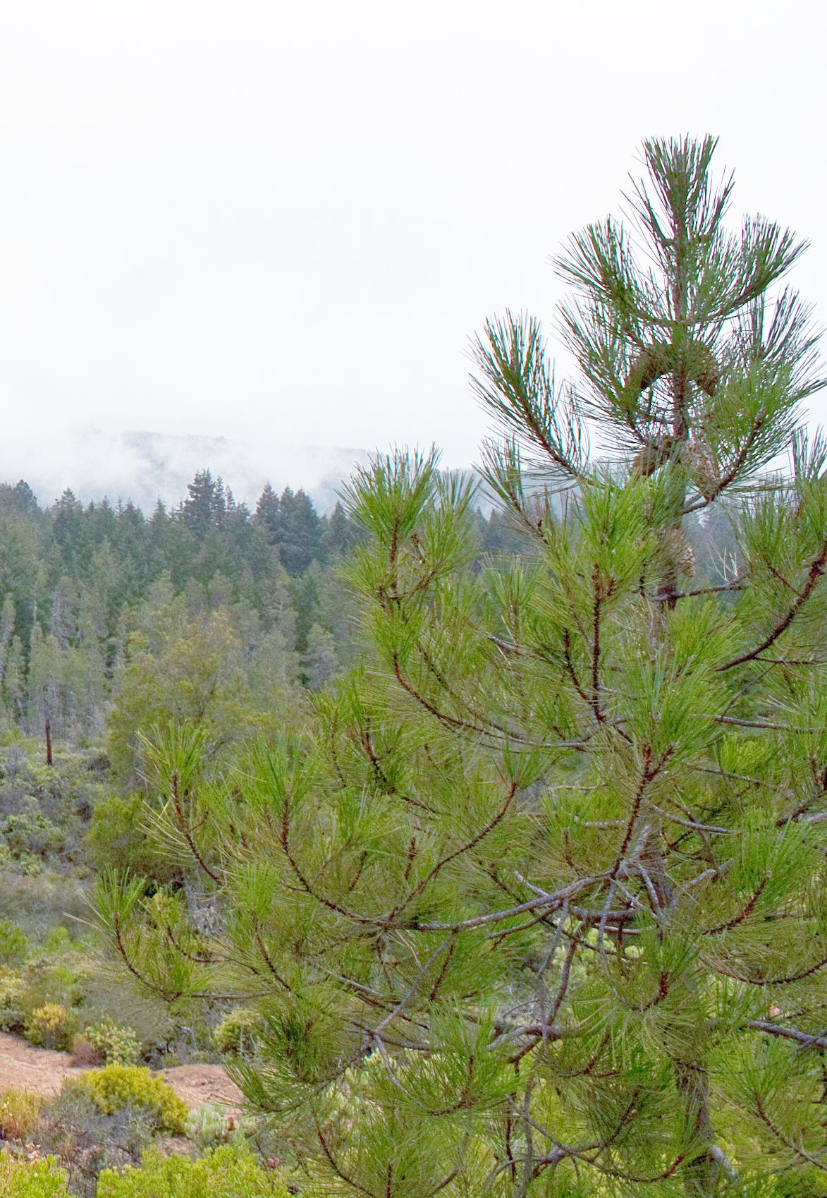 hastighet dating Boulder Colorado hastighet dating Royal Oak Michigan