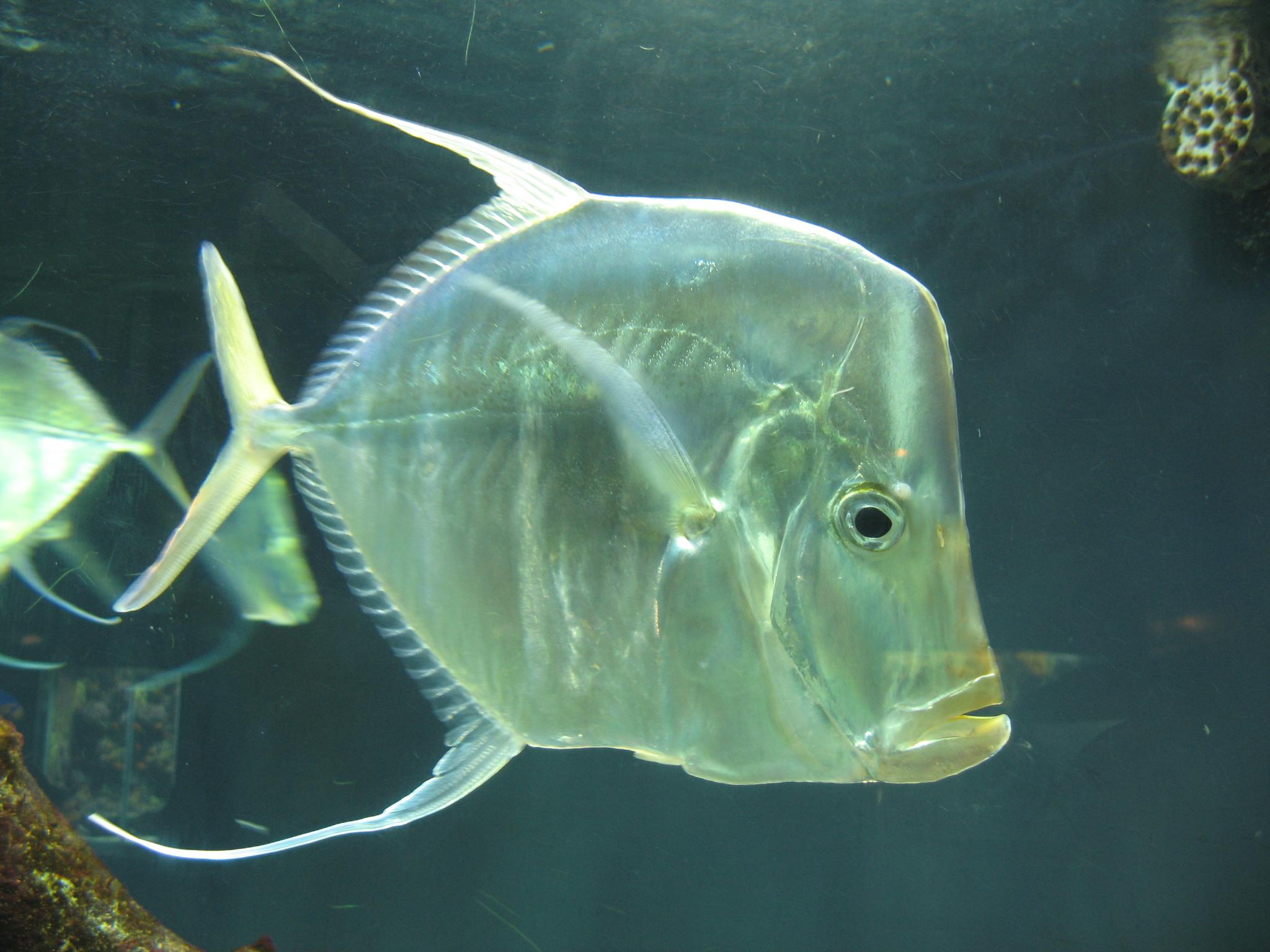 How To Fish For Flounder New Smyrna Beach Fl