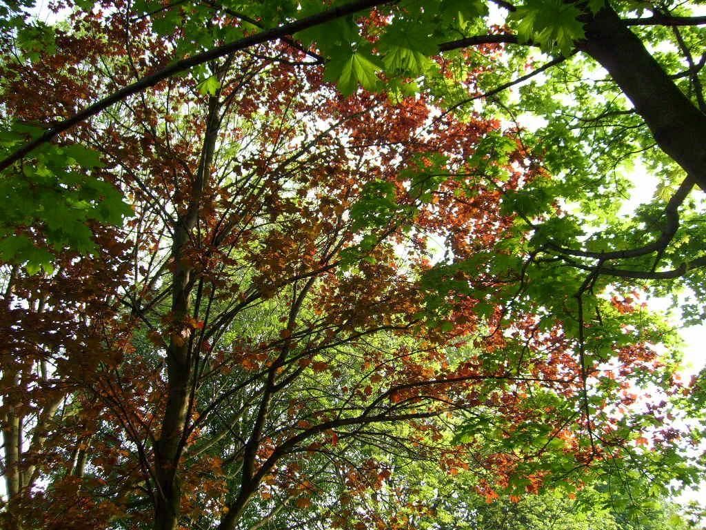 Árboles de cerezo en Central Park