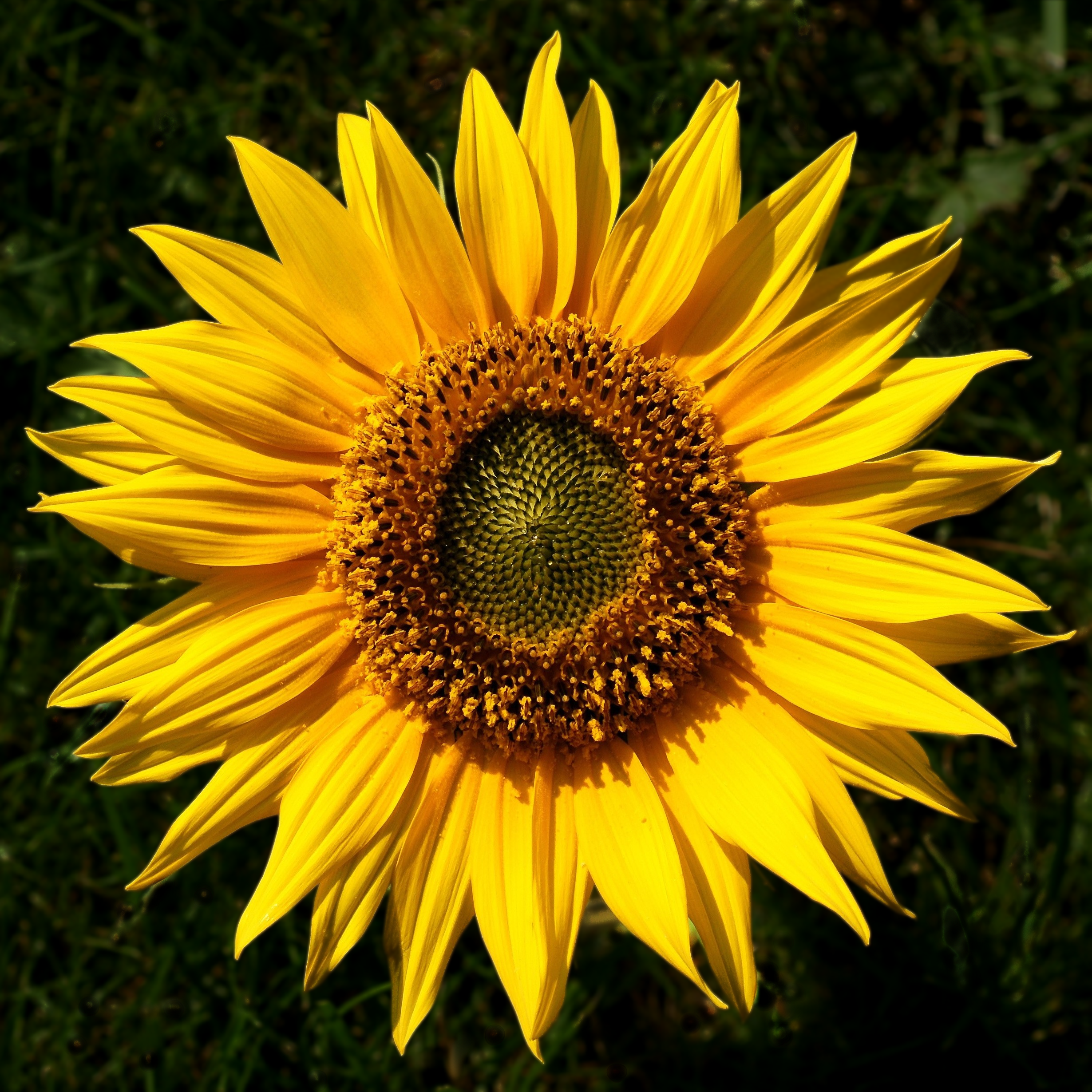 Flowers have more meaning than just their natural beauty 1 sunflower izmirmasajfo