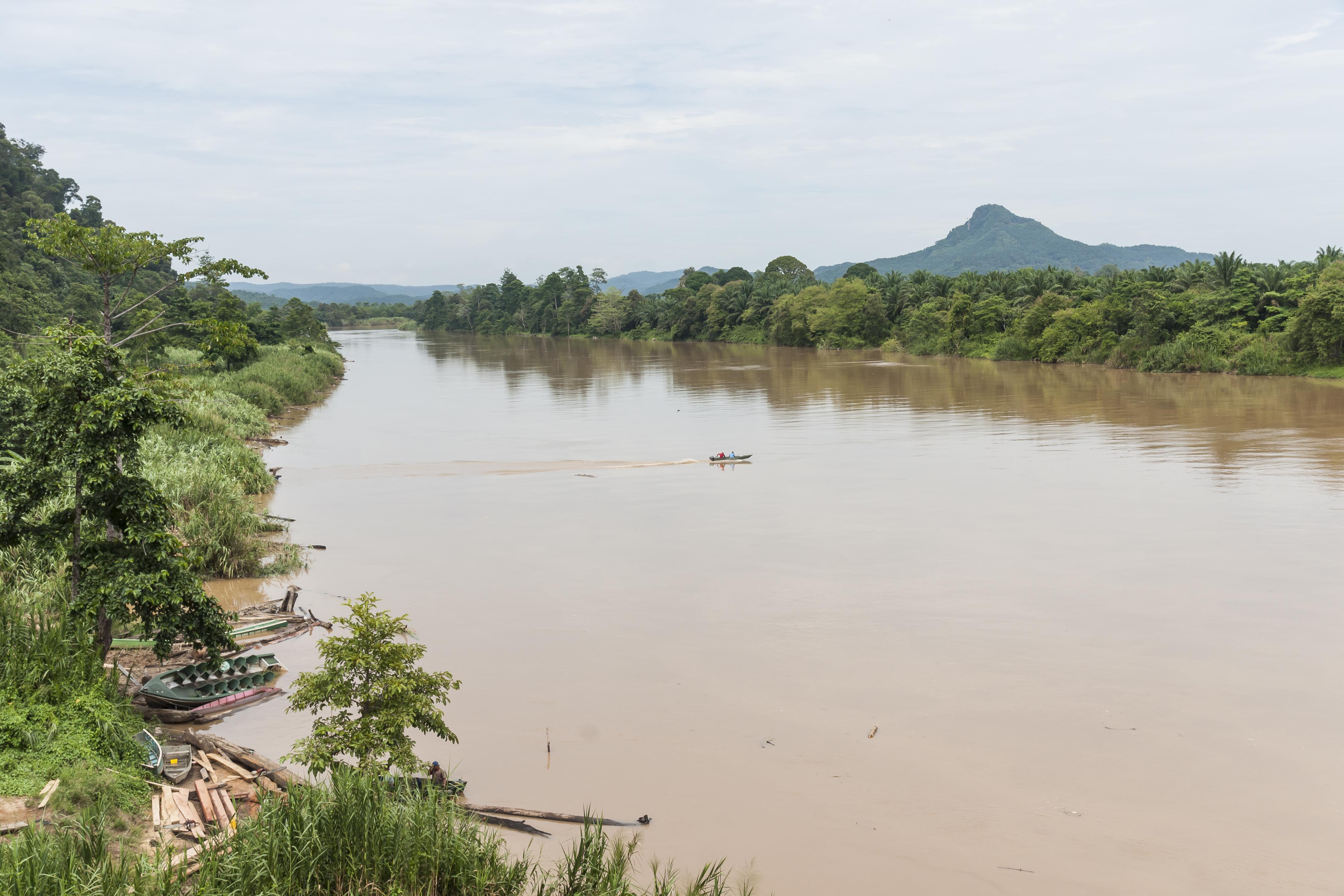 ファイル sungai kinabatangan sabah from bridge near batutulug jpg