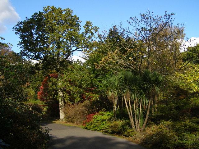 Trees on Main Drive, Exbury Gardens - geograph.org.uk - 1011764