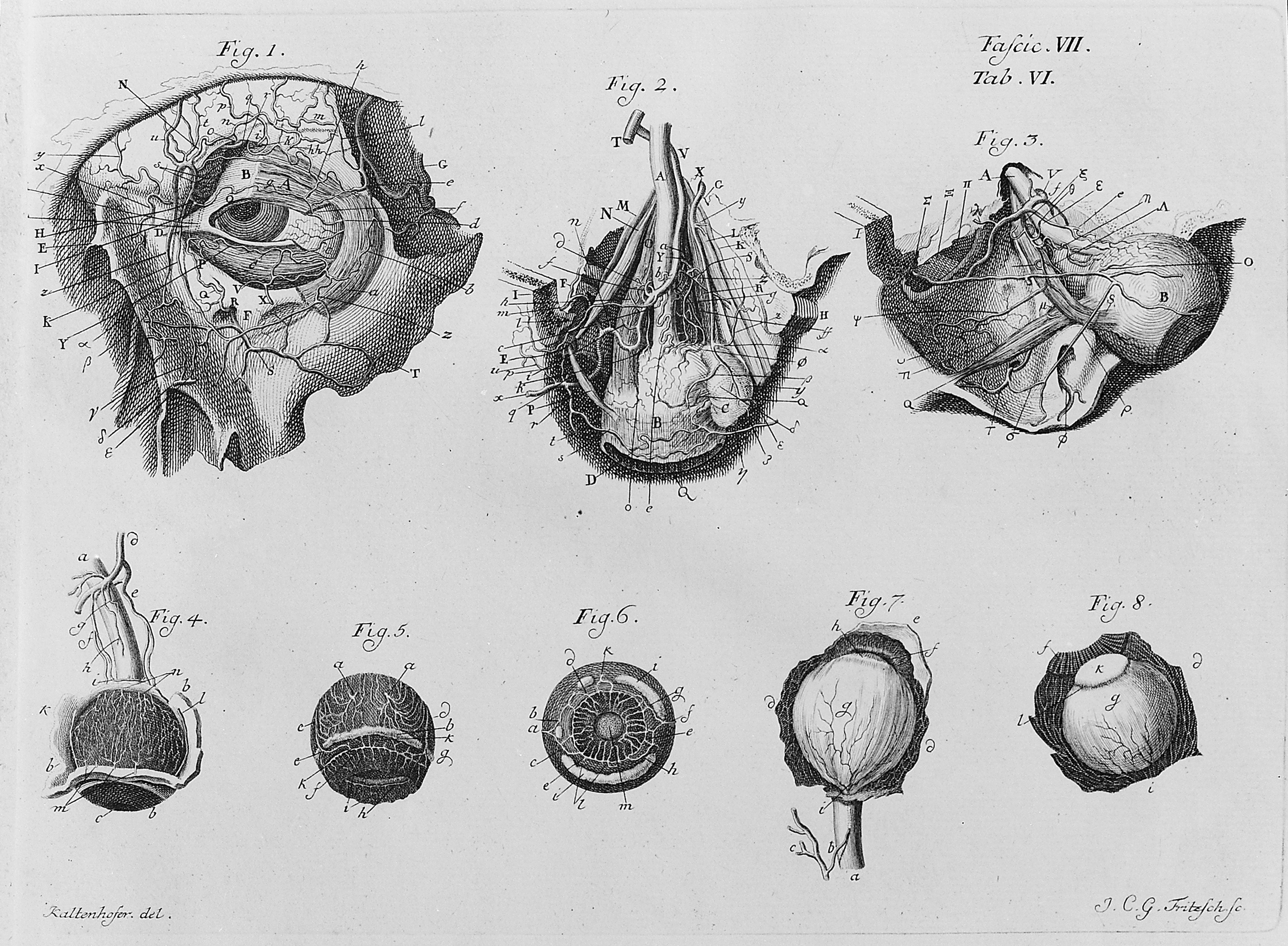 File:Anatomy of the eye, in Iconum Anatomicarum. Wellcome M0017124 ...