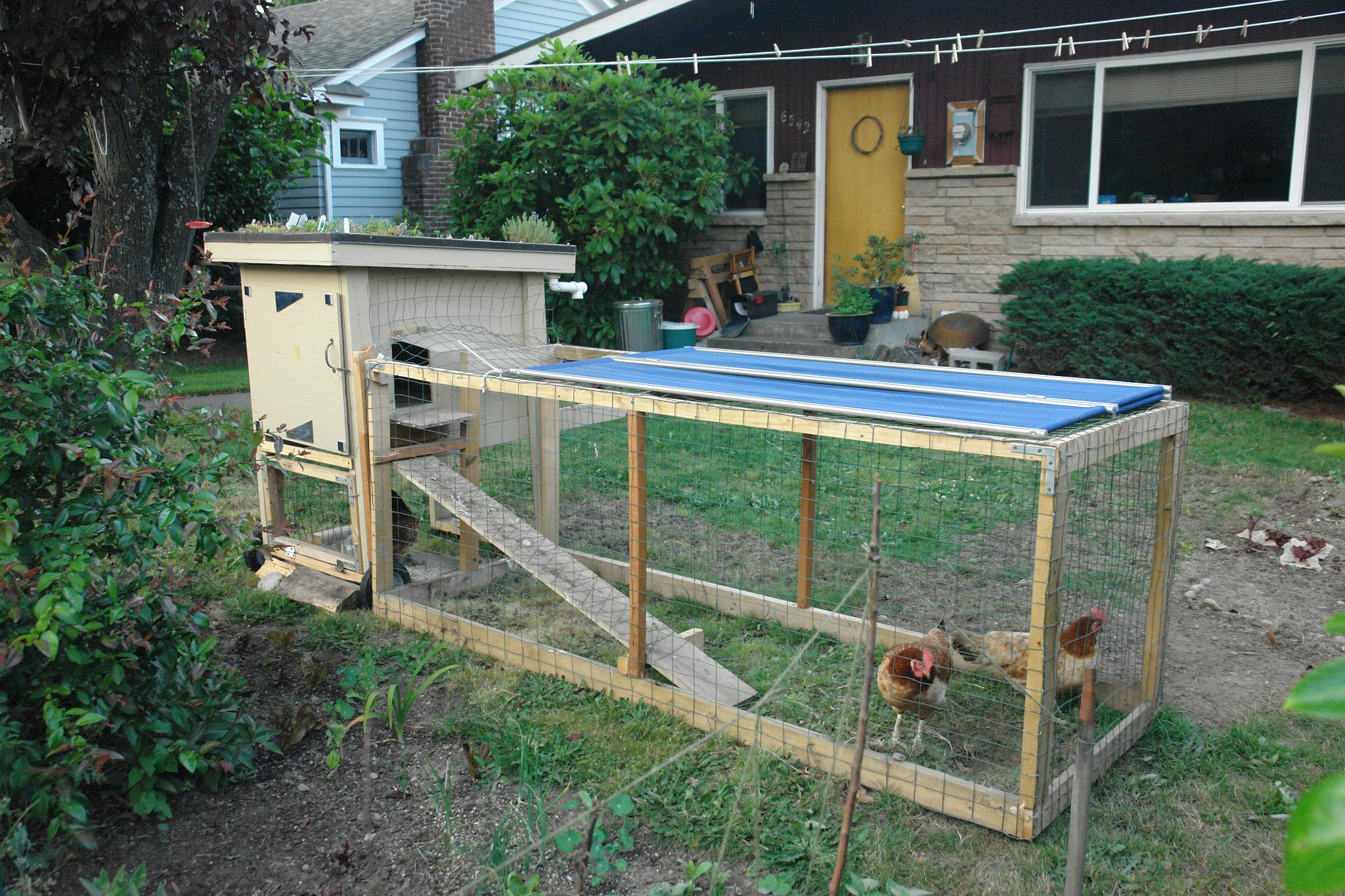 backyard chicken coop with green