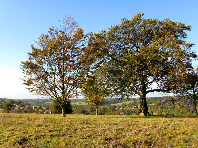 Beeches, Farthing Downs, Coulsdon - geograph.org.uk - 1551658