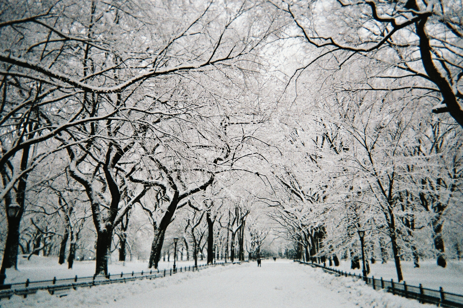 file central park walkway under snow nyc february wikimedia commons. Black Bedroom Furniture Sets. Home Design Ideas