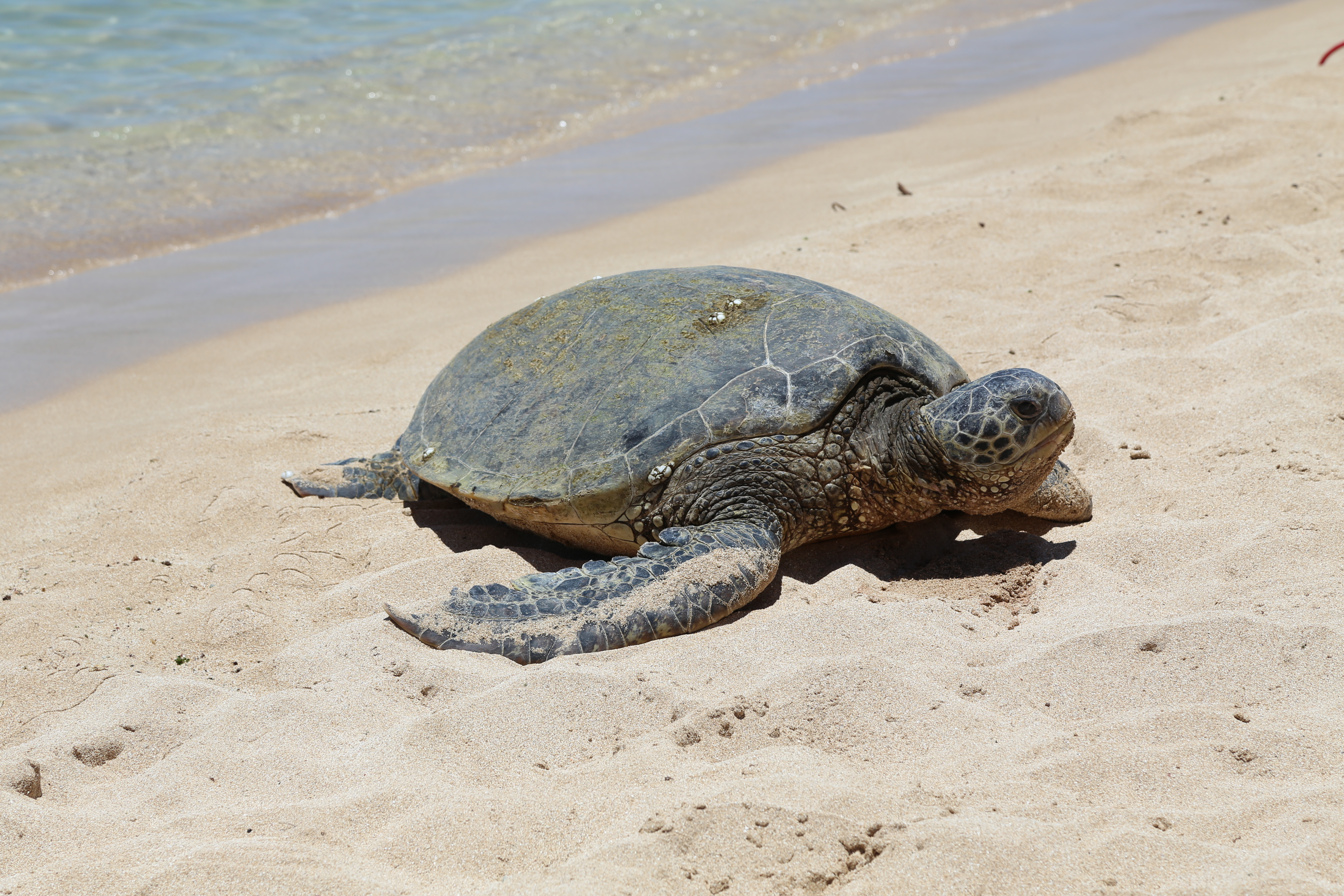 The History and Life of a Sea Turtle