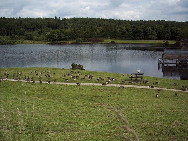 Cod Beck Reservoir - geograph.org.uk - 517142