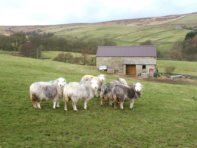 Field barn and Herdwicks - geograph.org.uk - 1202014.jpg