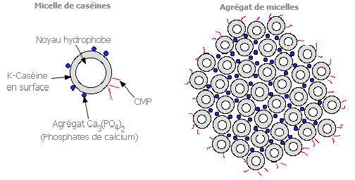 Floculation micellaire du lait