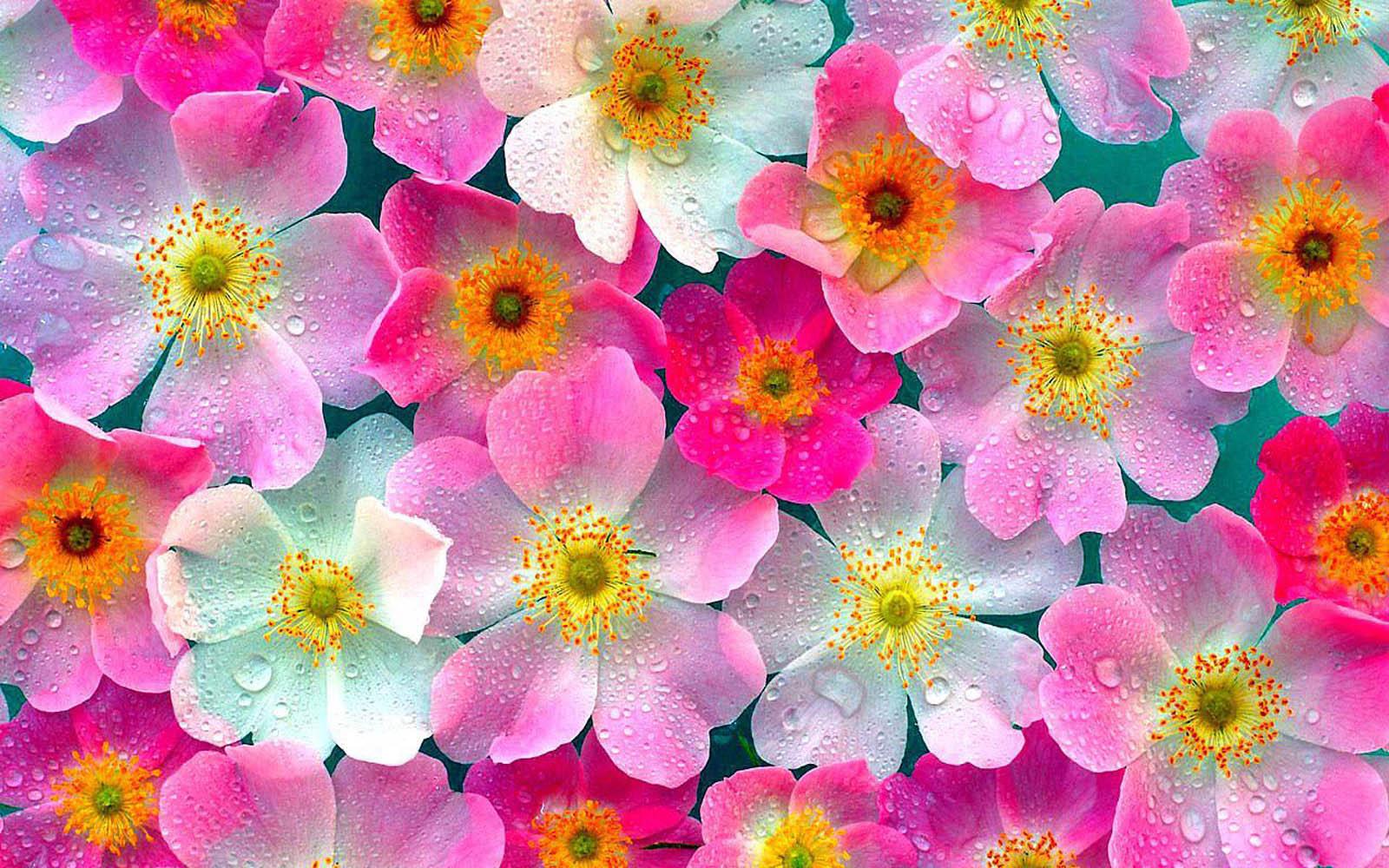 תוצאת תמונה עבור flowers