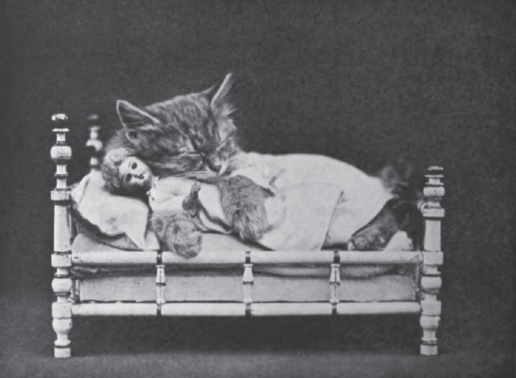 File:Harry Whittier Frees - Rosie and Jennie Took a Cat-Nap.jpg