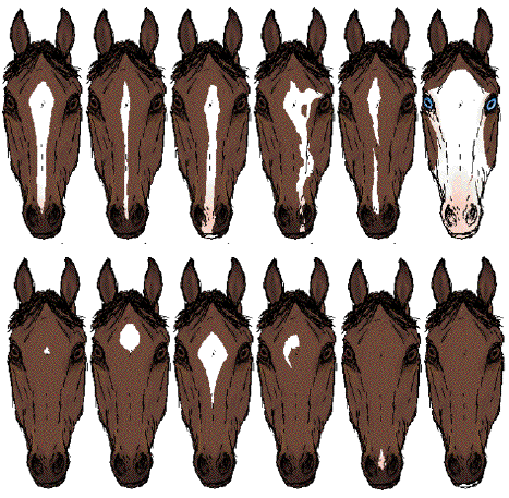 File:HorseFaceMarkings2.png