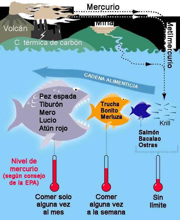 Presencia de mercurio en peces wikipedia la for Peces de agua fria para consumo humano