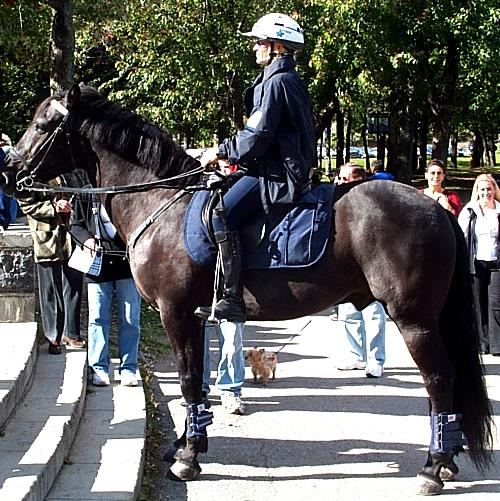 https://upload.wikimedia.org/wikipedia/commons/3/3a/Mounted-police.jpg
