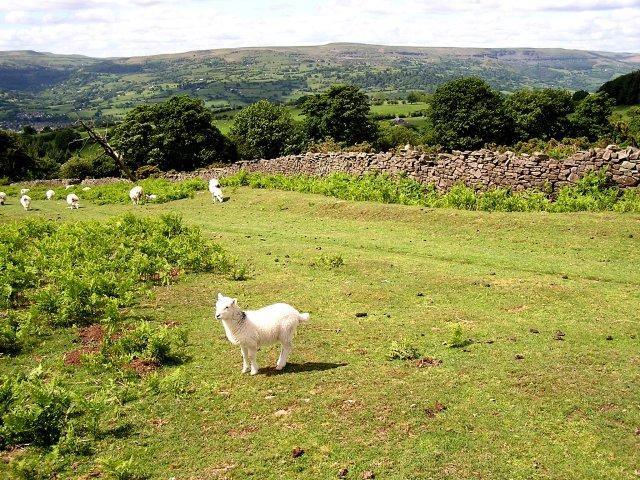Mynydd Llanwenarth - geograph.org.uk - 447480
