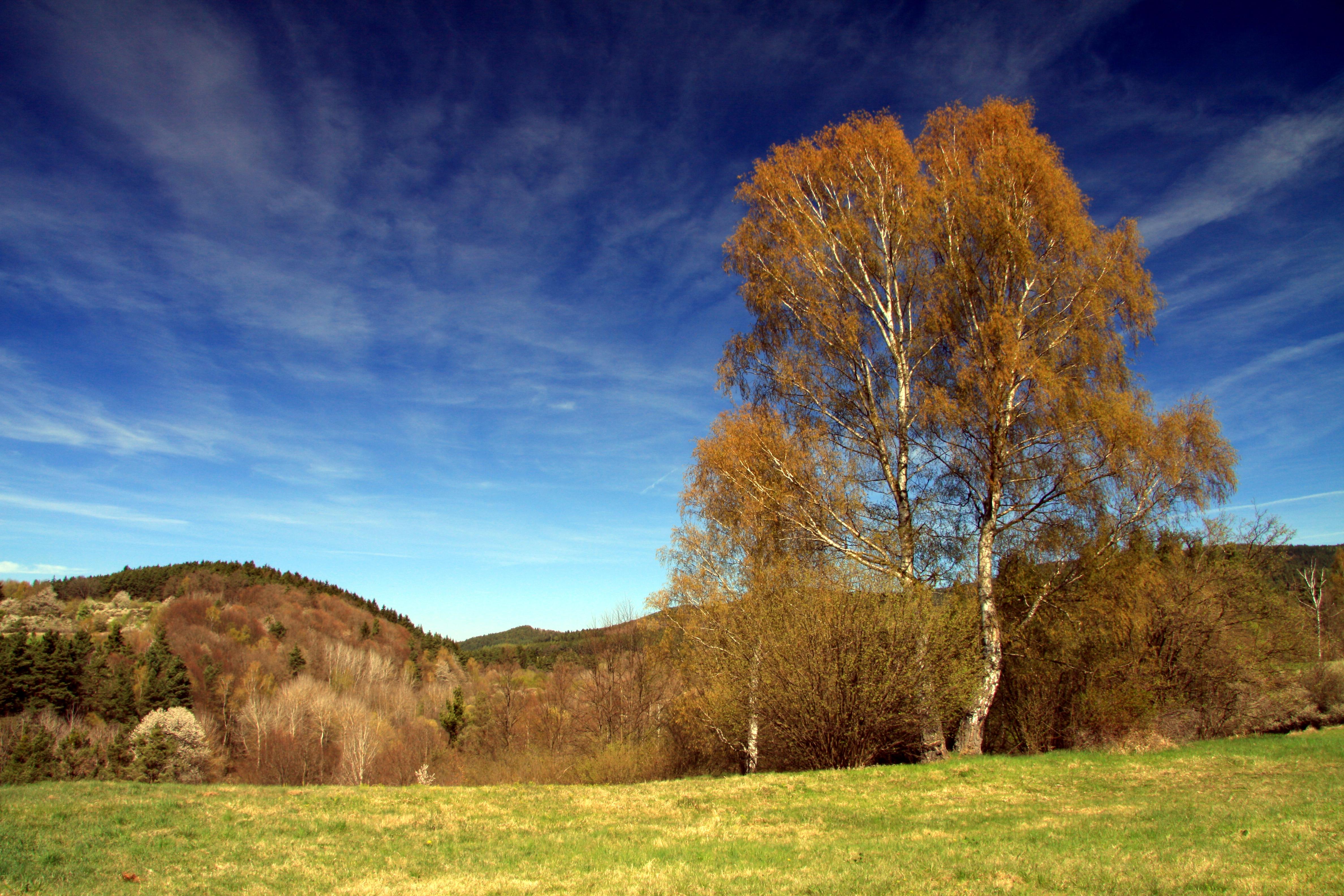 National nature reserve Vyšenské kopce in spring 2012 (15).JPG
